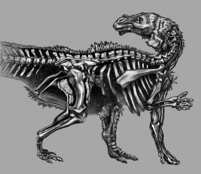 Camptosaurus illustration by A. Orkney